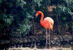 kahve-fali-flamingo
